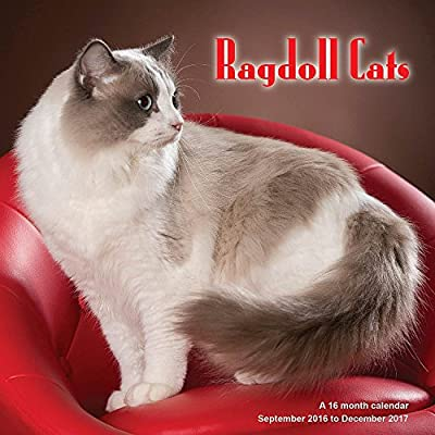 Radoll Cats Calendar - 2017 Wall calendars - Cat Calendar - Kitten Calendar - Monthly Wall Calendar by Magnum