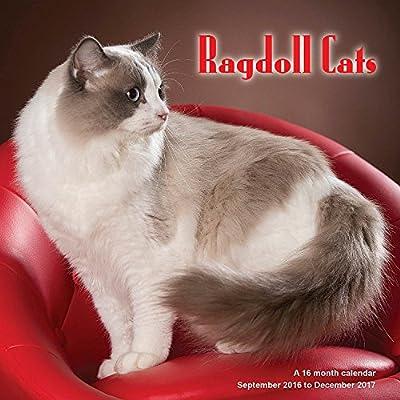 Radoll Cats Calendar - 2017 Wall calendars - Cat Calendar - Kitten Calendar - Monthly Wall Calendar by Magnum