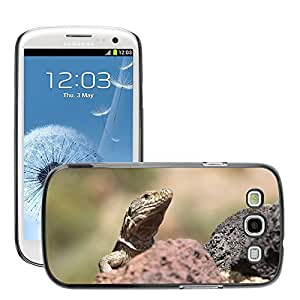 Hot Style Cell Phone PC Hard Case Cover // M00108614 Reptile Lizard Close Scaly Animal // Samsung Galaxy S3 S III SIII i9300