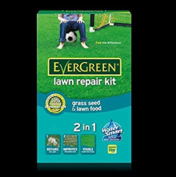 Evergreen Fast Grass Lawn Seed 15m2 Pluss 33/% Extra Free 4 Day Germination 600g
