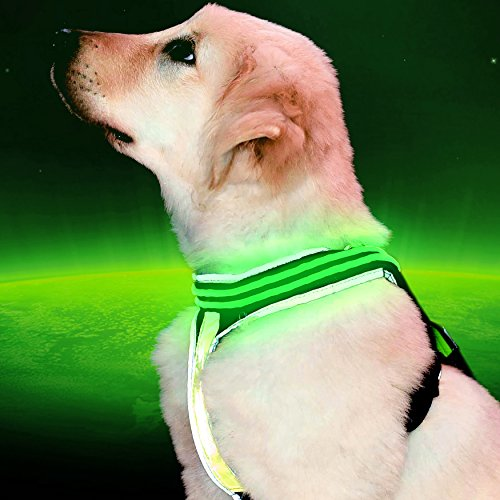 """[Pet Industries] Reflective LED Dog Harness -USB Rechargeable [Premium Edition] (Available in 5 sizes) (Medium (Girth: 23 - 28""""), Electric Blue)"""
