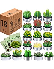 AI·X·IANG Cactus Tealight Candles, AiXiAng Handmade Delicate Succulent Cactus Candles for Birthday Party Wedding Spa Home Decoration