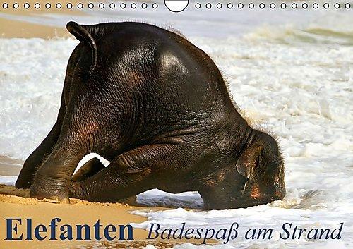 Elefanten - Badespaß am Strand (Wandkalender immerwährend DIN A4 quer): Elefanten Babys beim Baden in Thailand (Monatskalender, 14 Seiten) (CALVENDO Tiere) [Kalender] [Oct 08, 2014] Stanzer, Elisabeth