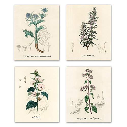 (Home Decor Popular Old-Fashioned Plant Botanical Prints,vintage Plant specimen wall art picture for bedroom living room home decoration Botanical Drawings art picture set of 4 8X10 inch Unframed )