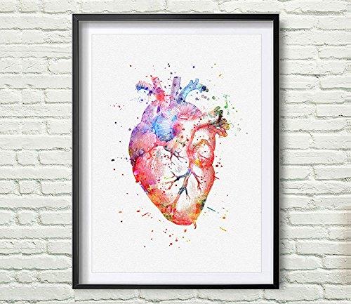 Amazon.com: Watercolor Anatomy Heart Images Vintage Graphics Art ...