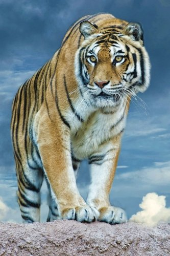 Tiger Any Day Planner Notebook: Blank Schedule Journal Diary (Wildlife 150 Planner) (Volume 1) pdf epub