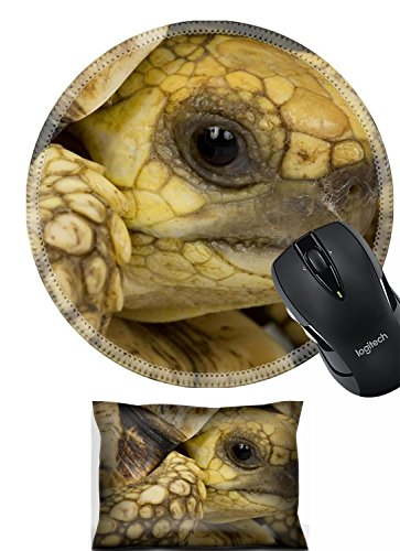Liili Mouse Mouse Wrist Rest and Round Mousepad Set, 2pc Wrist Support IMAGE ID: 3930117 close up of a Burmese Star Tortoise Geochelone platynota
