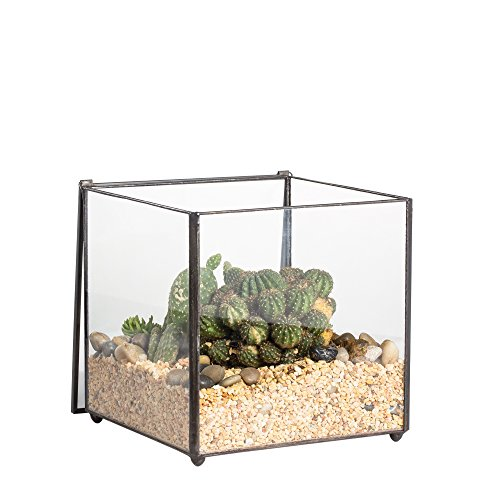 NCYP Vintage Footed Square Close Glass Geometric Terrarium with Swing Lid for Succulent Cacti Fern Moss Miniature
