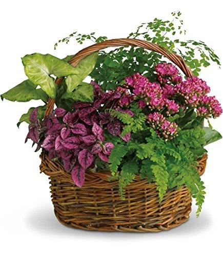 Treasure Garden Basket by Allen's Flower Market - Fresh Flowers Hand Delivered in Los Angeles Area (Garden Floral Maidenhair)