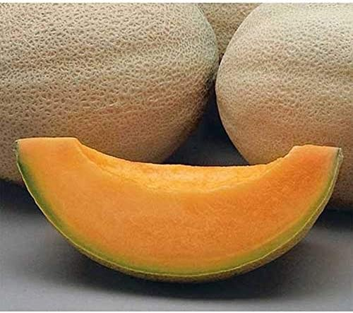 Amazon Com Athena F1 Cantaloupe Seeds 40 Seed Pack Garden Outdoor Common causes of pregnancy incontinence include: athena f1 cantaloupe seeds 40 seed pack