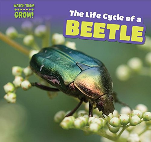 The Life Cycle of a Beetle (Watch Them Grow!)