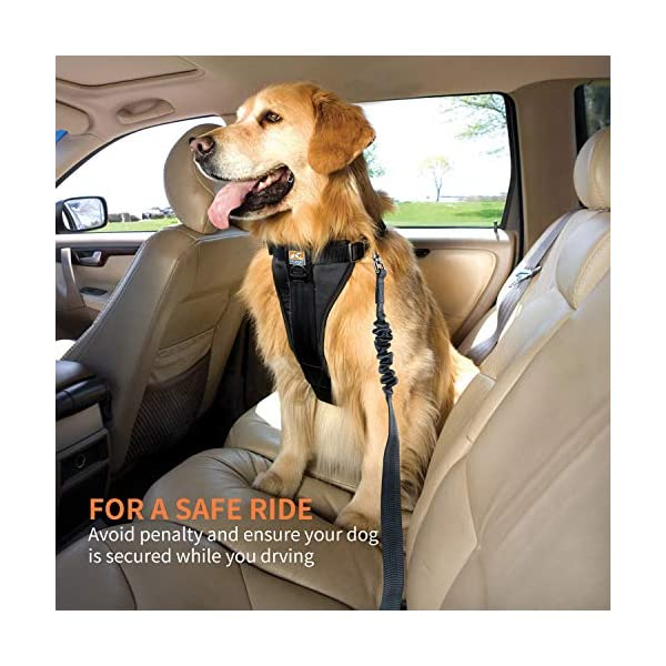 51CRGPLyNFL Toozey Hunde Sicherheitsgurt, 2 Stück Hundesicherheitsgurt mit Elastischer Ruckdämpfung und Starke Karabiner…
