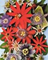 Passion Fruits of the World 15 Seeds-Assorted Varieties