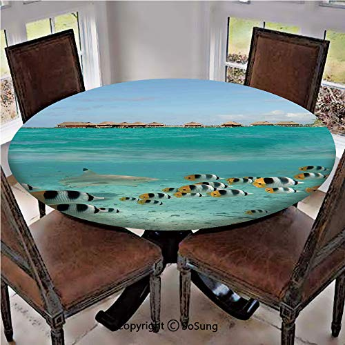 Elastic Edged Polyester Fitted Table Cover,Blacktip Reef Shark Chasing Butterfly Fish Lagoon of Bora Bora Tahiti,Fits up to 36
