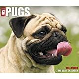 Just Pugs 2018 Daily Desk Boxed Calendar