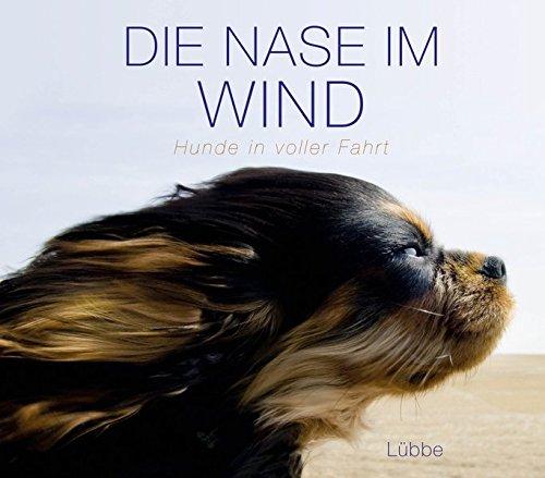 Die Nase im Wind: Hunde in voller Fahrt
