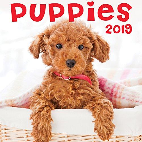- Puppies 2019 Wall Calendar