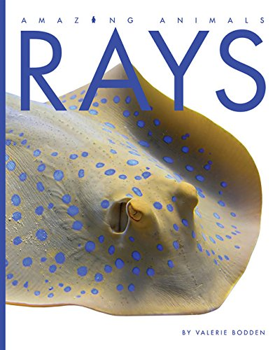 Rays (Amazing Animals)