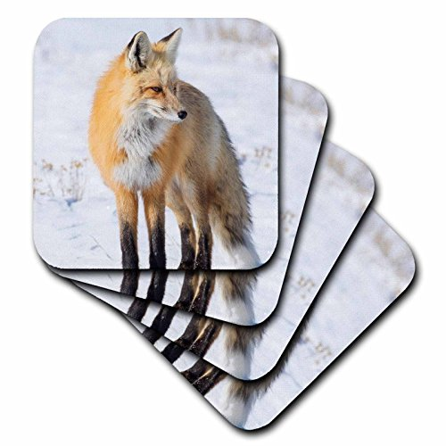 3dRose cst_260651_3 Red Fox Standing in Snow, Yellowstone National Park, Wyoming Set of 4 Ceramic Tile Coasters