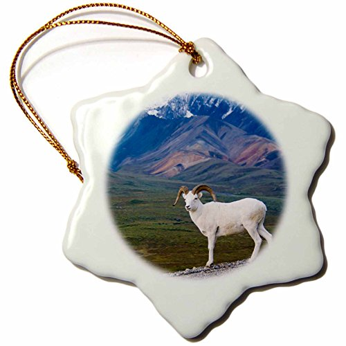 3dRose orn_87526_1 AK Denali, Dall sheep wildlife, Polychrome Pass - US02 JGI0151 - Jerry Ginsberg - Snowflake Ornament, Porcelain, ()