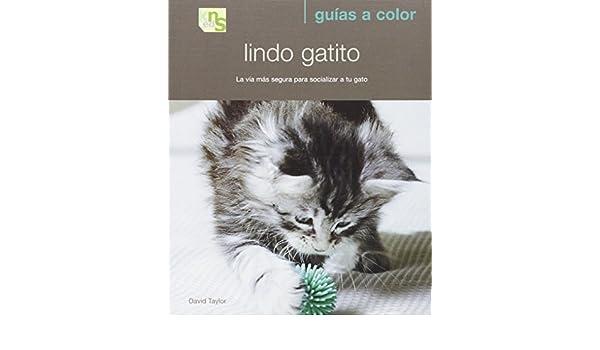 Lindo Gatito: la via mas Segura para Socializar a tu Gato: David Taylor: 9788493662639: Amazon.com: Books