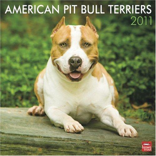 Bull Terrier 2010 Calendar - American Pit Bull Terriers 2011 Square 12X12 Wall
