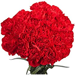 200 Fresh Cut Red Carnations for Valentine's Day | Fresh Flowers Express Delivery | Perfect Gift for Valentine's Day.