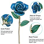 ZJchao-24-Carat-Gold-Trimmed-Rose-Flower-Gift-for-Her-Valentines-Day-Mothers-Day-Anniversary-Wedding-Home-Decor-Light-Blue