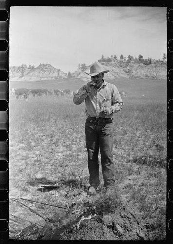 Photo: Cowboy eating 'Rocky Mountain oysters, ' Quarter Circle U Ranch roundup, Montana . Size: 8x10 (Masks For Venetian Wall Sale)