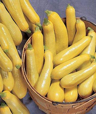 Squash, Summer, Saffron 1 Pkt. (50 (1 Pkt 50 Seeds)