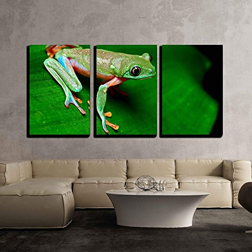 (3 Piece Canvas Wall Art, Tropical Frog on Leaf in Rain Forest of Costa Rica,Modern Giclee Print Decor Stretched & Framed Gallery Wrapped Canvas Painting for Living Room/Bedroom, 16