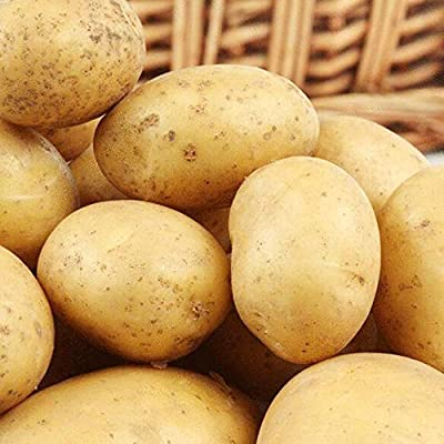 200pcs Potato Seed Organic Grown Non GMO Vegetable Organic Bonsai Garden Organic Food Fruit and Vegetable for Home Garden : Garden & Outdoor