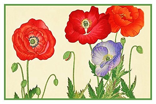 - Orenco Originals Tanigami Konan Asian Poppy Flowers Counted Cross Stitch Pattern