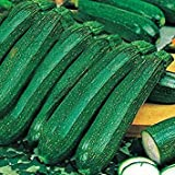 buy IDEA HIGH Kings Seeds - Courgette Ambassador F1-15 Seeds now, new 2020-2019 bestseller, review and Photo, best price $7.14