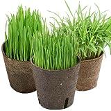 (観葉)猫草 おまかせやわらか生牧草 直径8cmECOポット植え(無農薬)(2ポット) 猫草 [生体]