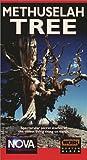 Nova: Methuselah Tree [VHS]