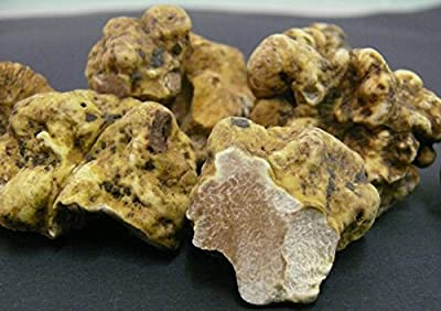 White Truffle Mushroom (tuber magnatum) Mycelium Spores Spawn Dried Seeds
