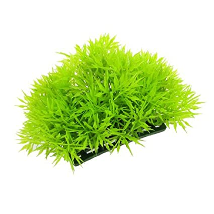 Vasche In Plastica Per Piante.Amazon Com Edealmax Plastica Decor Acquario Aquascaping Pianta