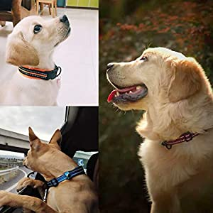 Collar-para-Perros-Pequenos-Grandes-Medianos-Reflectante-Suave-Acolchado-Impermeable-Ajustable-Transpirable-con-Etiqueta-de-Nombre-para-Caminar-Correr-Trekking-Entrenamiento-Azul-S