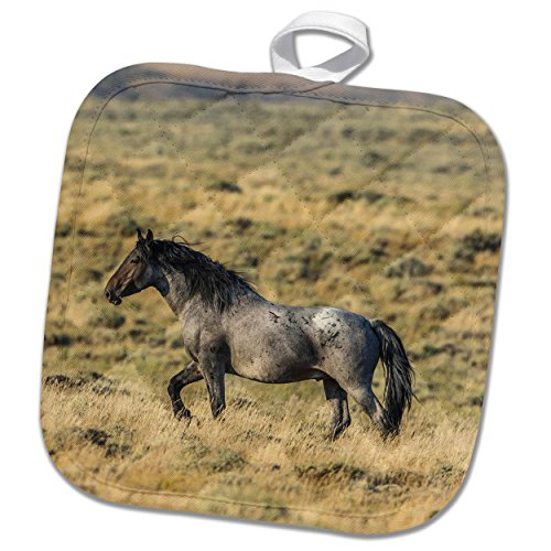 3dRose Danita Delimont - Horses - USA, Wyoming, Sweetwater County, Red Desert, Wild Stallion. - 8x8 Potholder (phl_260625_1) (Wash Sweetwater)