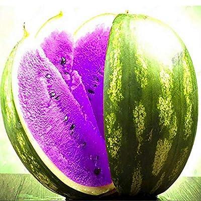 QiBest 10 pcs/Bag Purple Watermelon Seeds Home Garden Plant Seeds Fruits : Garden & Outdoor