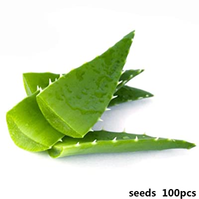 100 Pcs Beauty Aloe Seed Seeds Fruit Vegetables Flower Home Planting-Plant : Garden & Outdoor