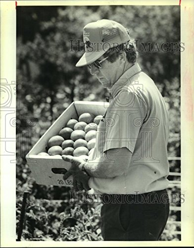 Vintage Photos Historic Images 1989 Press Photo Ben Becnel Carries Creole Tomatoes at Plaquemines Parish Farm - 10.25 x 8 in