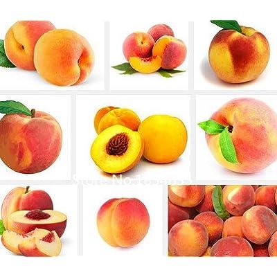 Garden Plant 40PCS / bag Sweet Peach Seeds, Autumn Red Peach Tree Fruit Seeds Bonsai Seed : Garden & Outdoor