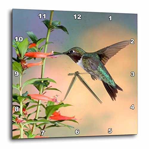 3dRose Ruby-Throated Hummingbird Male on Cigar Plant, Marion Co Il Wall Clock, 15 by ()