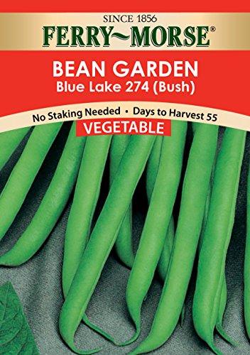 - Ferry Morse Bean Blue Lake 274 (Bush) Vegetable Seed