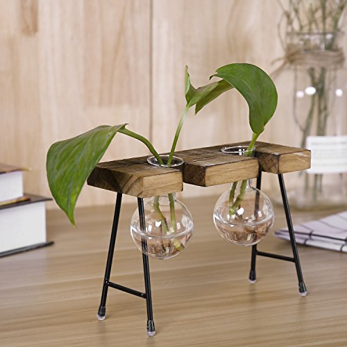 r Bulbs Terrarium Planter Set with Rustic Wood Stand (Antique Flower Bulbs)