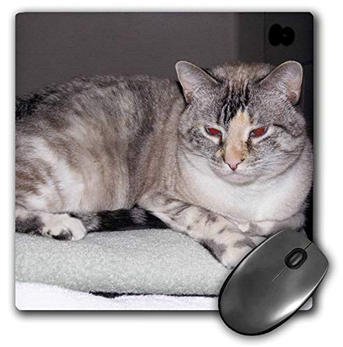 3dRose Jos Fauxtographee- Cat on Towel - A Sweet pet cat Sitting on a Towel with Gray and Brown Stripes - Mousepad (mp_291084_1)