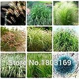 graminées ornementales graines, lapin Tails Lagurus Ovatus 100 graines * herbe Bonsai Adorable ornemental, Livraison gratuite!