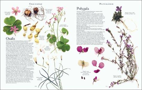 2: The Botanical Garden: Volume II: Perennials and Annuals